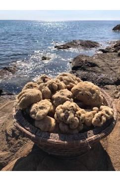 Eponge de mer naturelle
